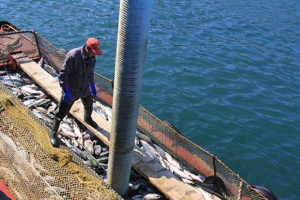 Fish, Fishing, Kurile Islands, Etorofu, Sea