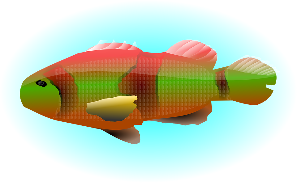 Animal, Colorful, Fish, Lake, Ocean, Sea