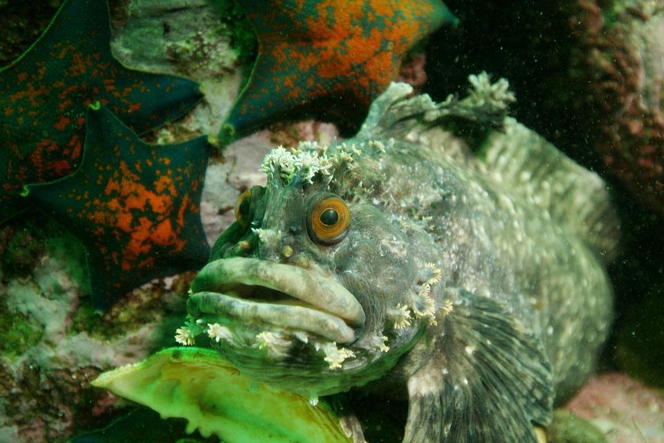 Fish, Underwater Photography, Sea bottom