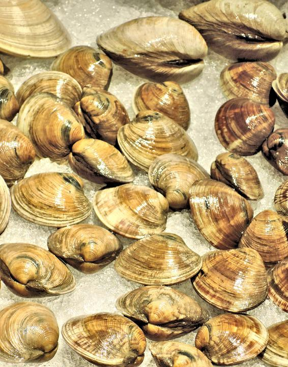 Fresh Atlantic Clams, Ice, Shells, Food, Fish