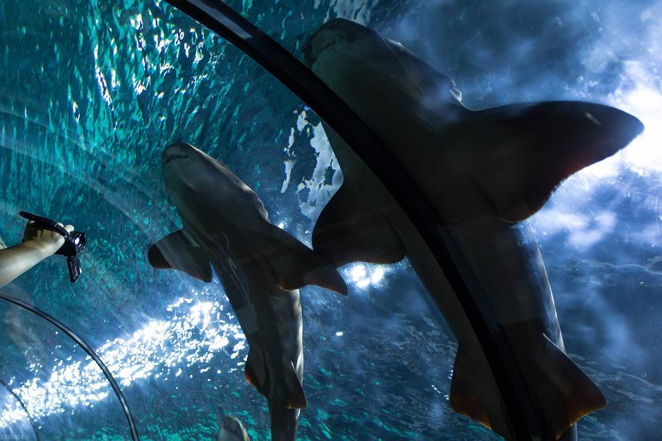 Shark, Hai, Fish Tunnel, Underwater