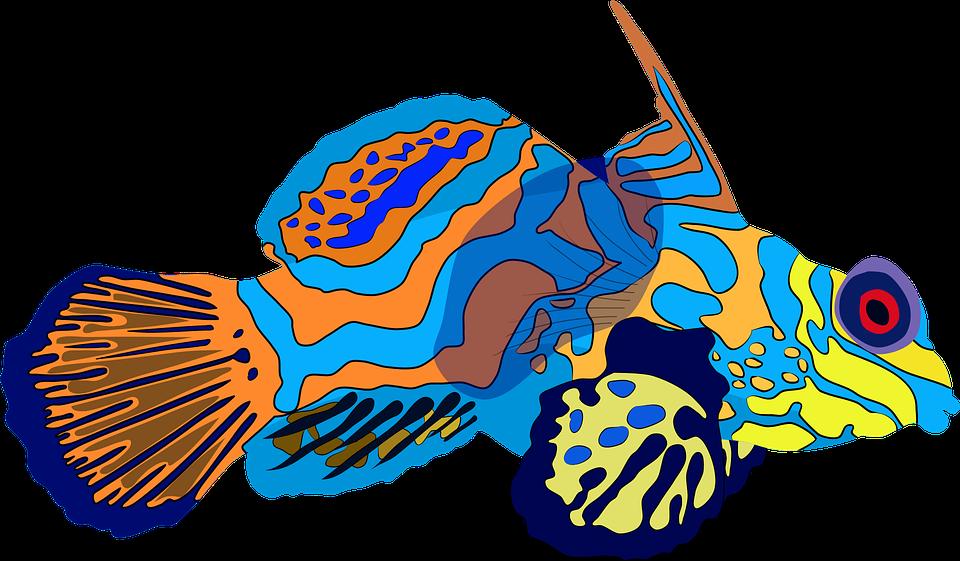 Mandarinfish, Dragonet, Fish, Sea, Underwater, Water
