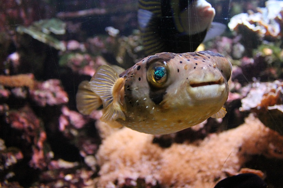 Fish, Aquarium, Eyes, Water