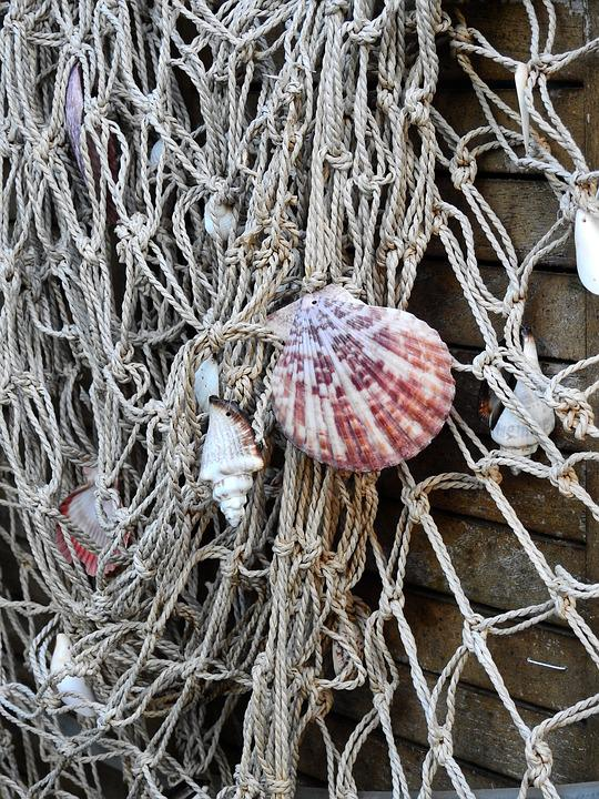 Shell, Sea, Lake, Beach, Fish, Fishing, Fishing Net