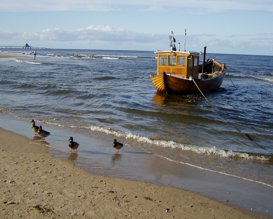 Baltic Sea, Sea, Fishing Boat, Ducks, Duck