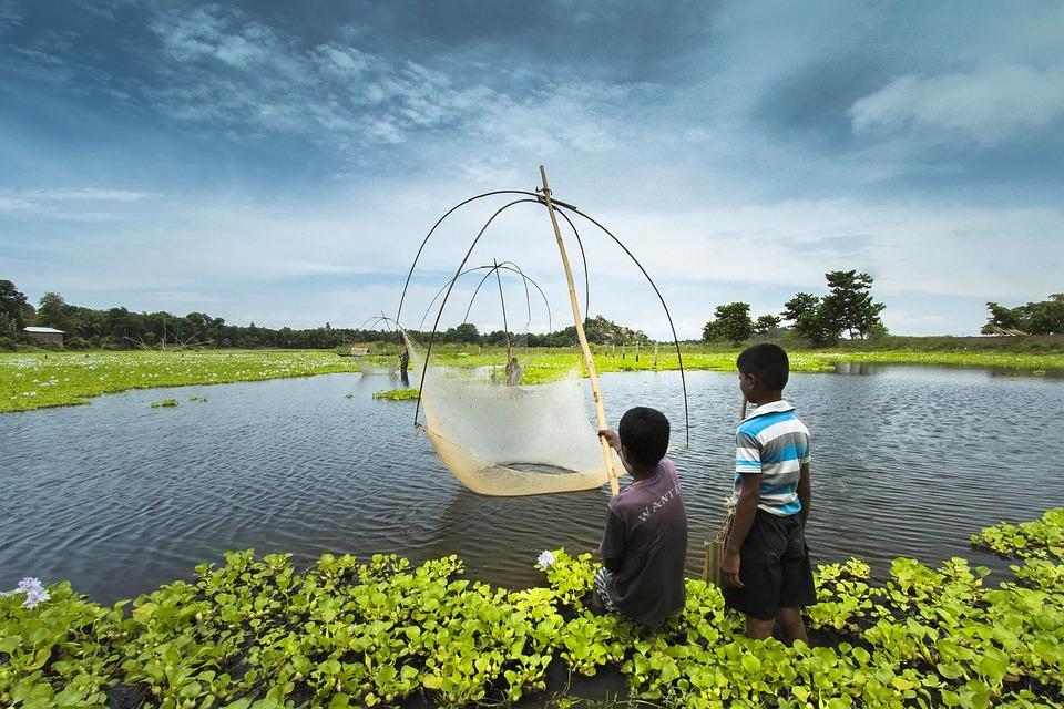 Fishing, Assam, India, Children, Kid, Water, Rural