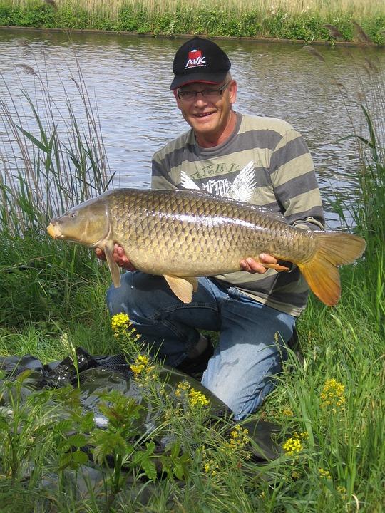 Carp, Zuid Willemsvaart, Summer, Fish, Fishing