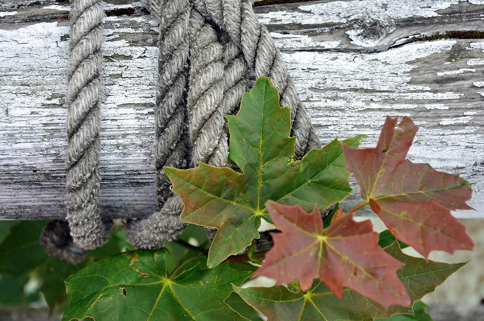Rope, Dew, Wood, Bar, Paint, Color, Fixing, Turn, Wind