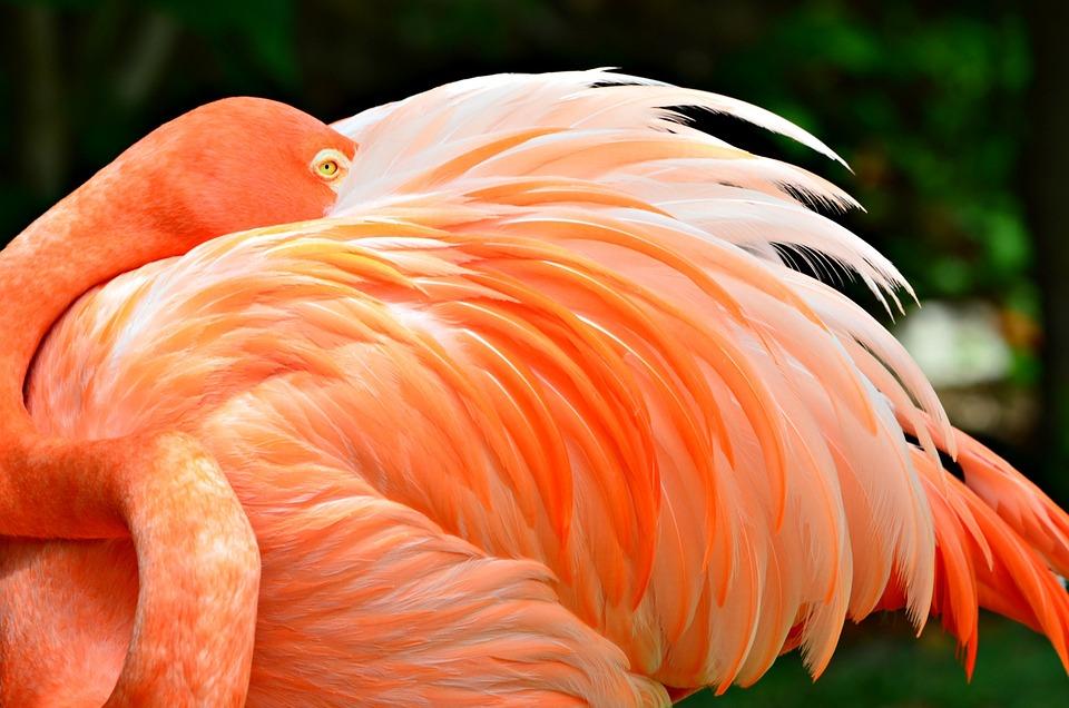 Flamingo, Close Up, Nature, Wild, Animal, Exotic