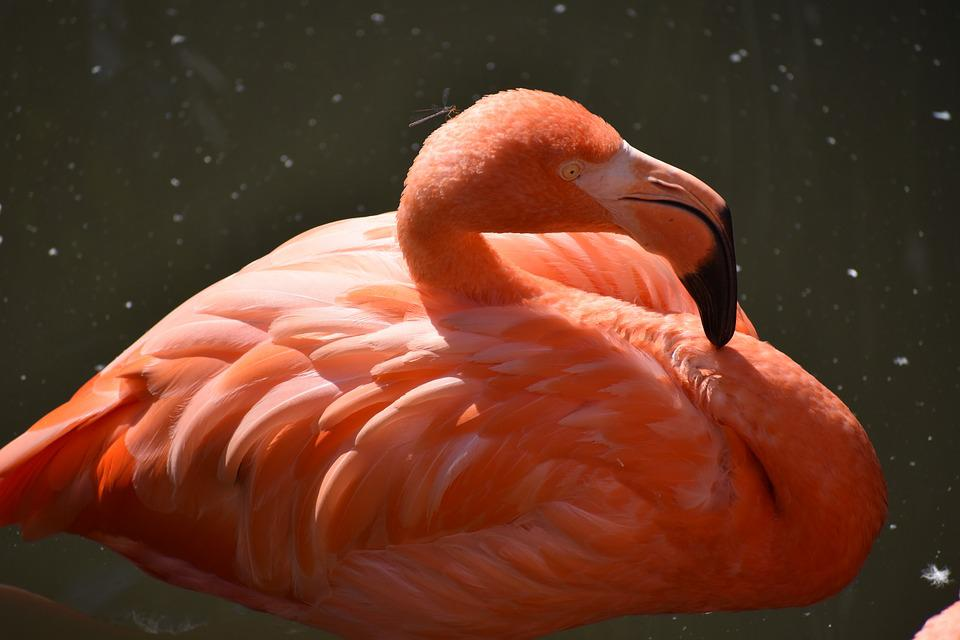 Animal, Zoo, Flamingo, Pink, Birds, Pink Flamingo