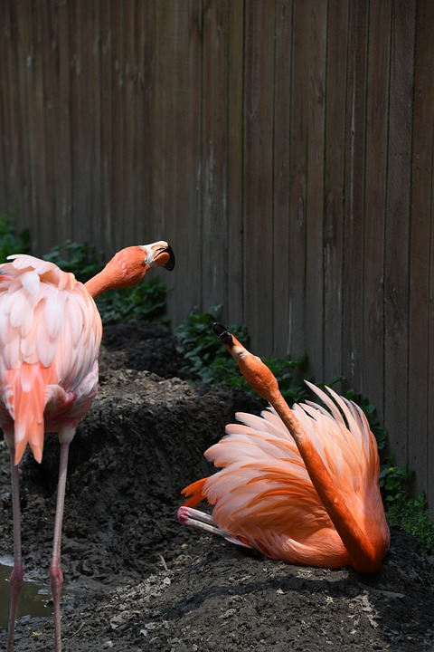Flamingo, Bird, Zoo, Pink, Tropical, Beak, Wildlife