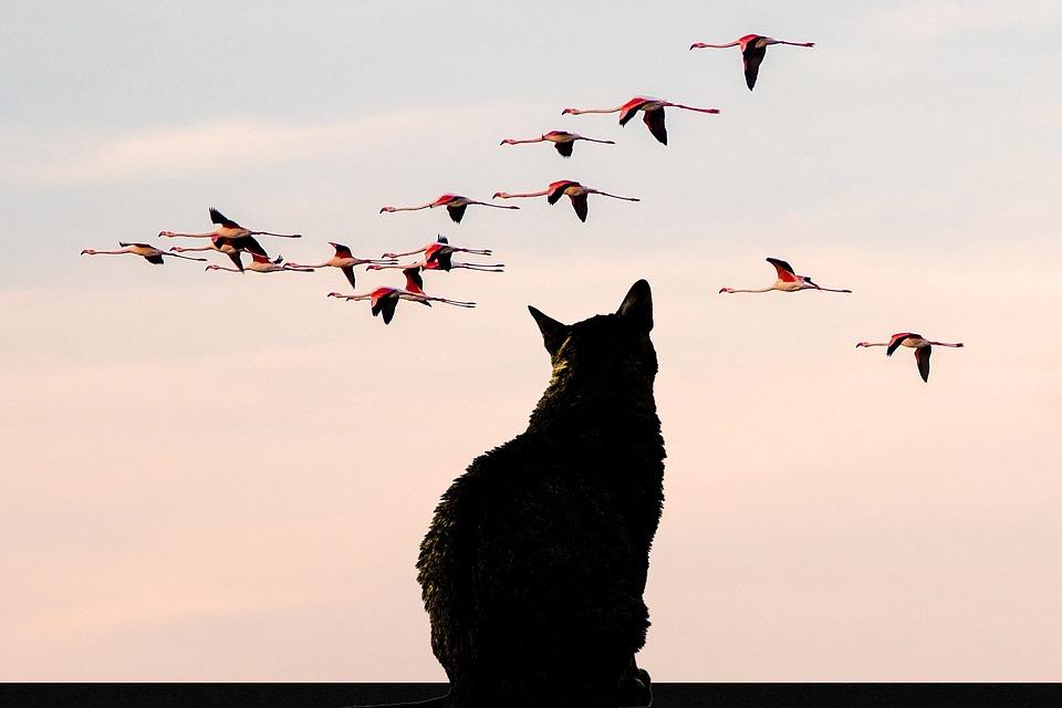 Nature, Cat, Animals, Birds, Flamingos, Observation