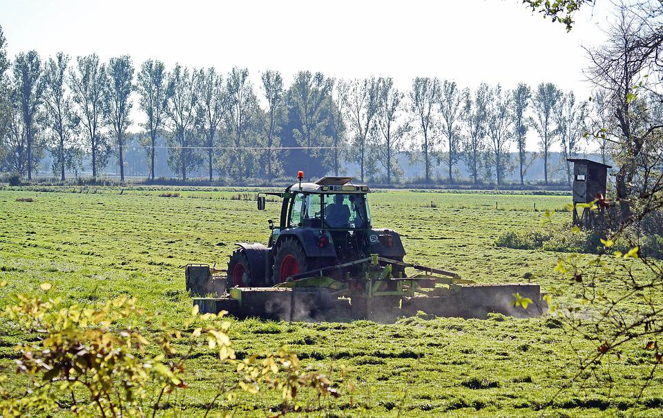 First Cut, Meadow, Tractor, Mähmschine, Flat, Flat Land