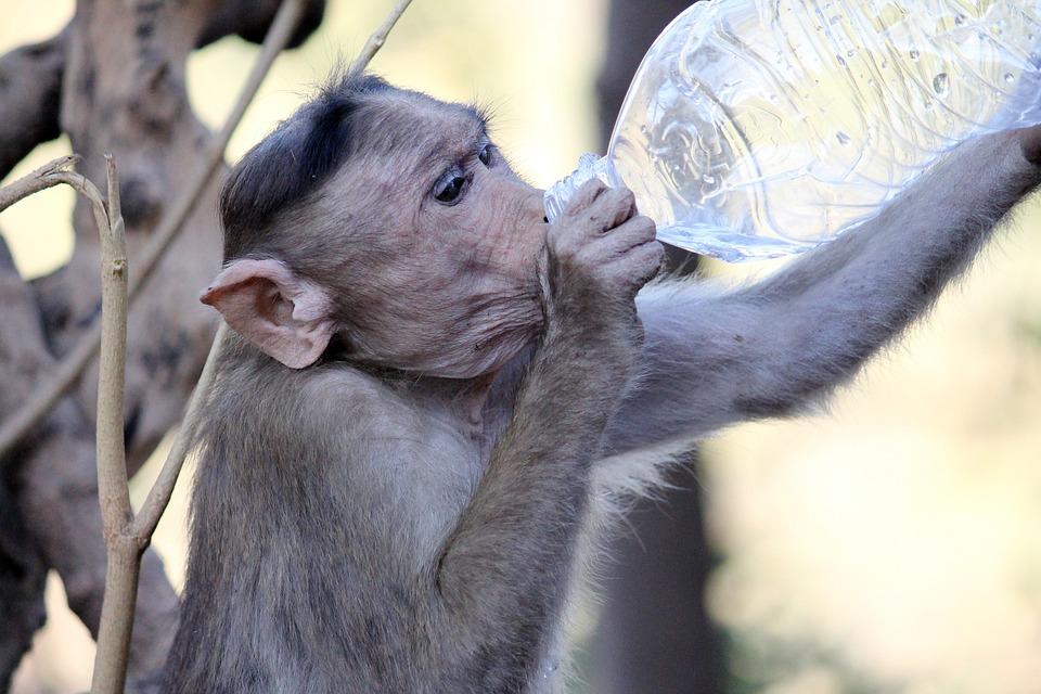 Monkeys, Animals, Wildlife, Friends, Fleas, Cleaning