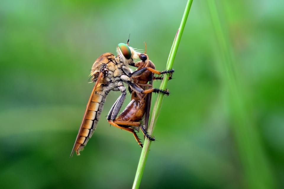 Large, Eating, Flies