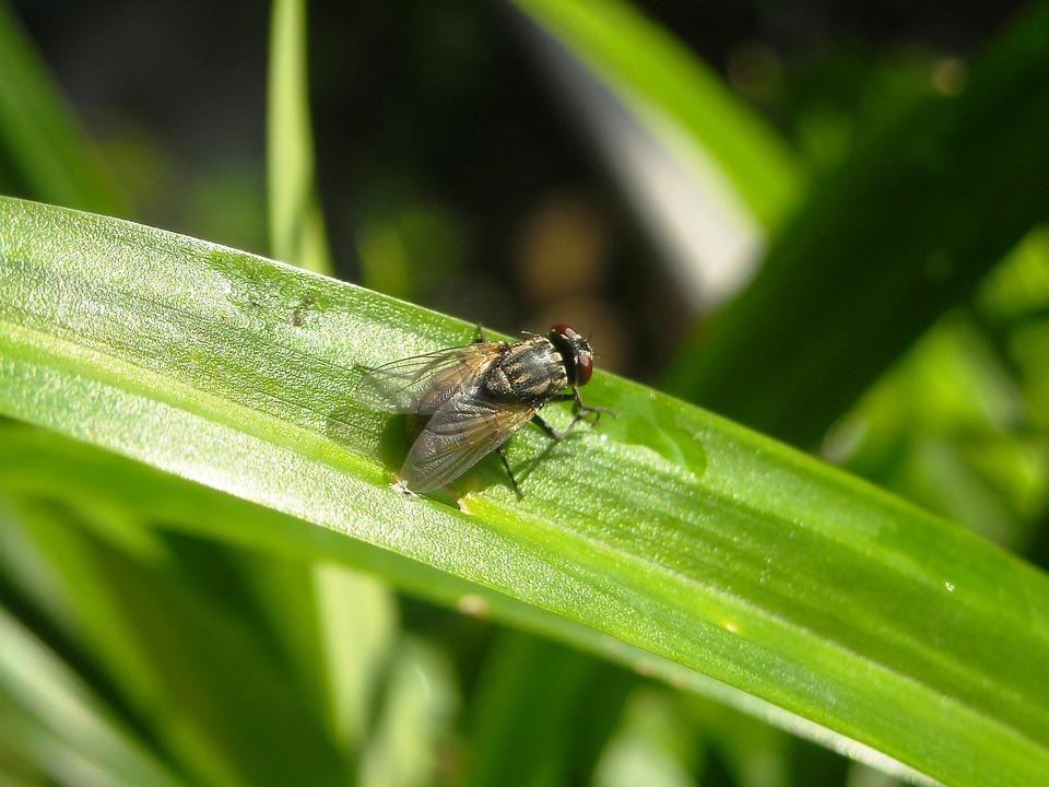 Flies, Insects, Leaf, Pandan, Green