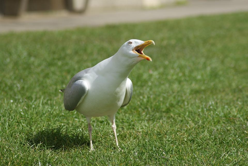 Bird, The Seagull, Animal, Sea, Flight, Nature, Feather