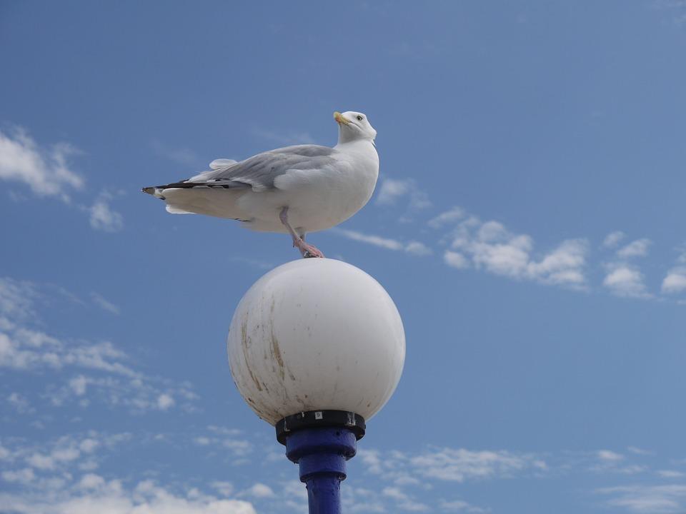 Seagull, Sky, Gull, Flight, Bird, Nature, Cloud