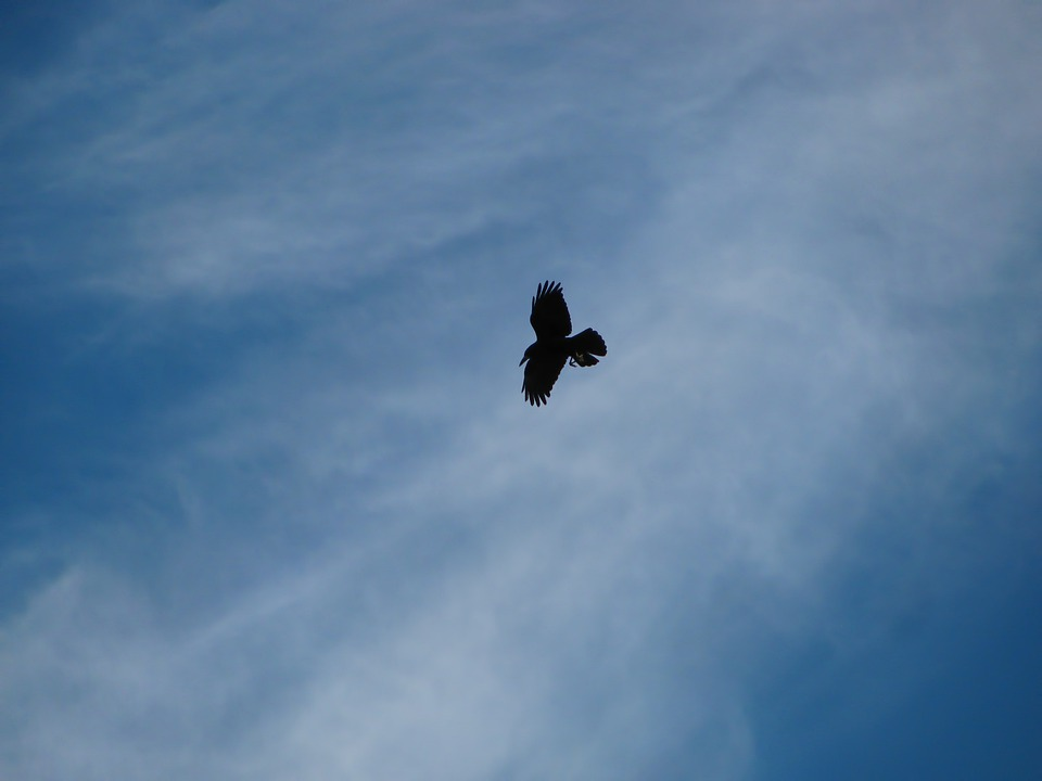 Raven, Bird, Birds, Flight, Sky, Clouds, Cirrus, Colors