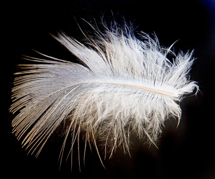 Feather, White, Plumage, Bird, Downy, Flight, Wildlife