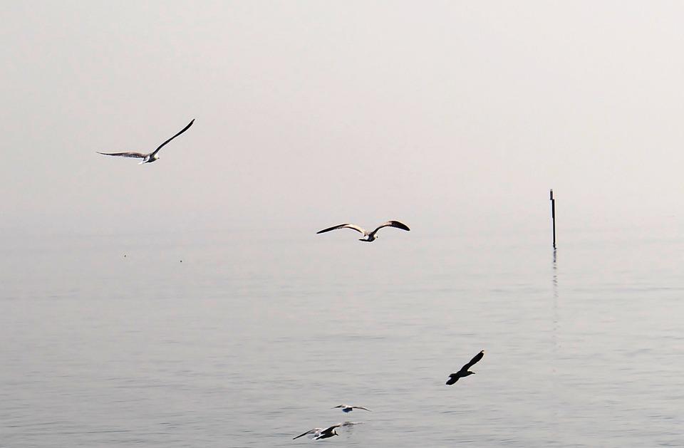 Gulls, Flight, Haze, Lake, Flight Form