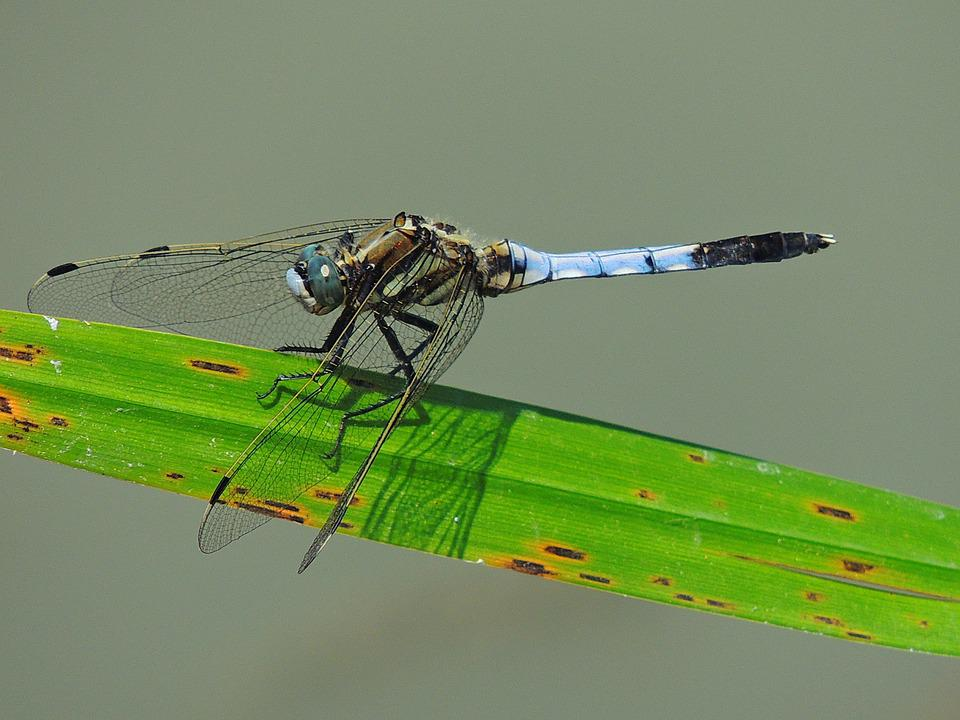 Nature, Green, Wings, Insect, Lake, Dragon-fly, Flight