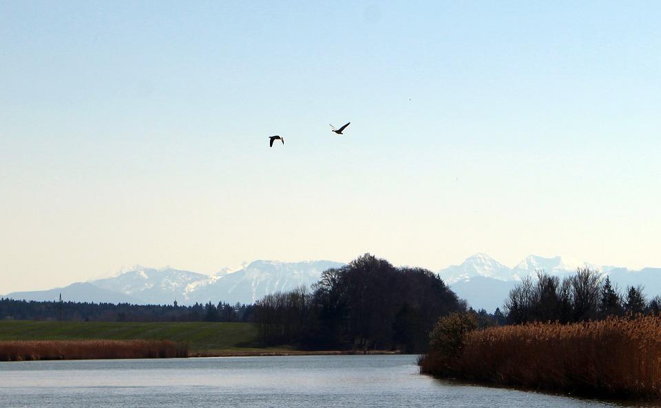 Bird Flight, Flight, Geese, Flying, Migratory Birds