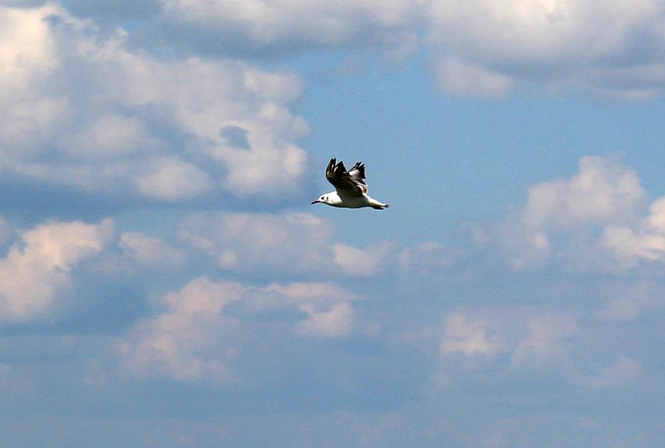 Gull, Flight, Sky, Clouds, Clouds Form, Mood