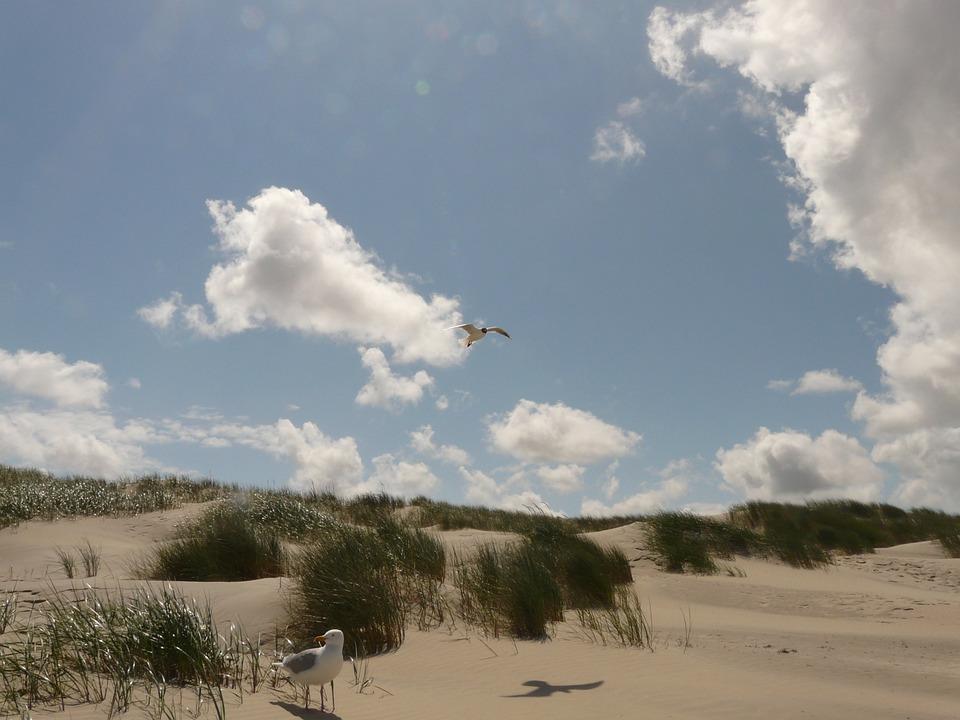 Black Headed Gull, Fly, Flight, Sky, Sail, Top, Seagull
