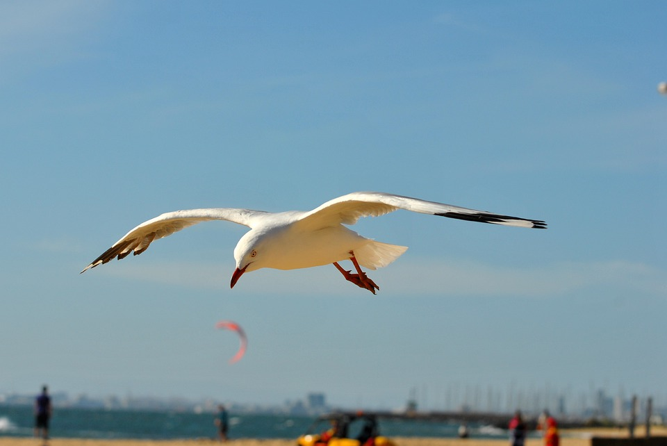 Seagull, Bird, Wings, Flying, Wing, Winged, Fly, Flight