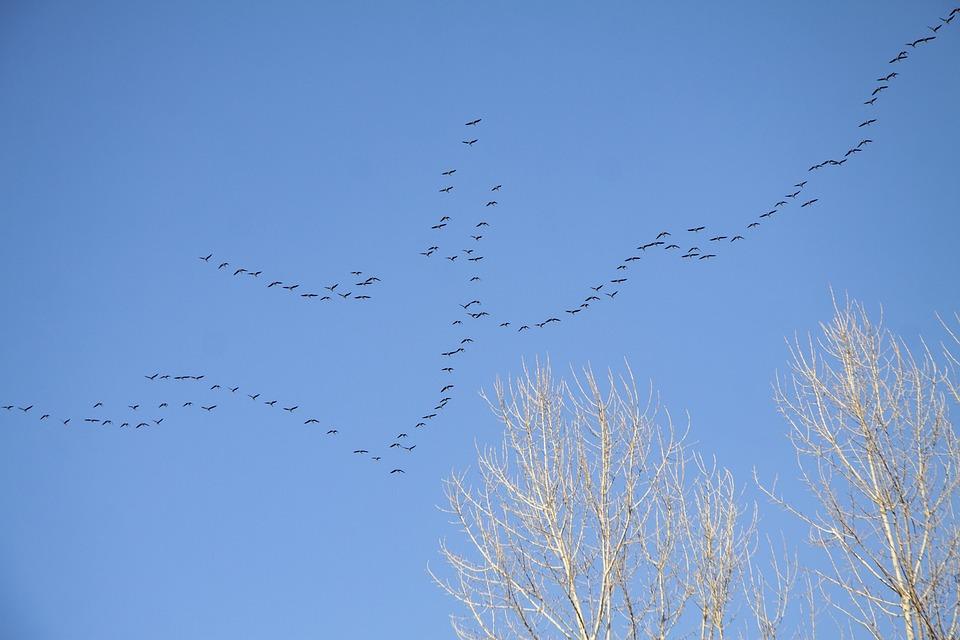 Key, Birds, Spring, Arrived, Sky, Wedge, Flights