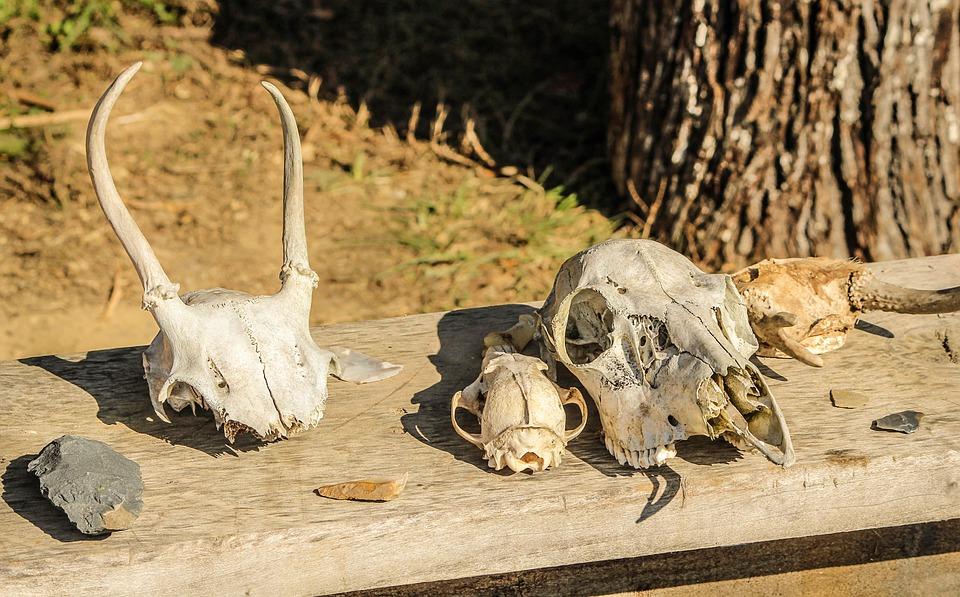 Stone Tools, Skulls, Bones, Flint, Arrowhead, Scrapers