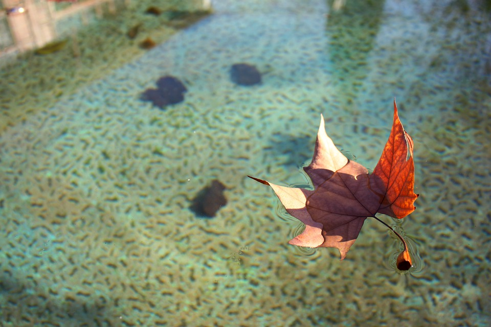 Leaf, Water, Float, Autumn, Leaves, Dry, Aqueous