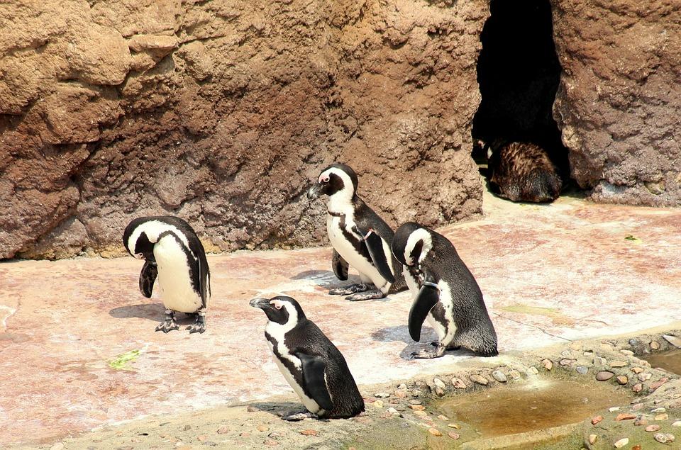 Free Photo Floating Figure Birds Penguins Nature Animals