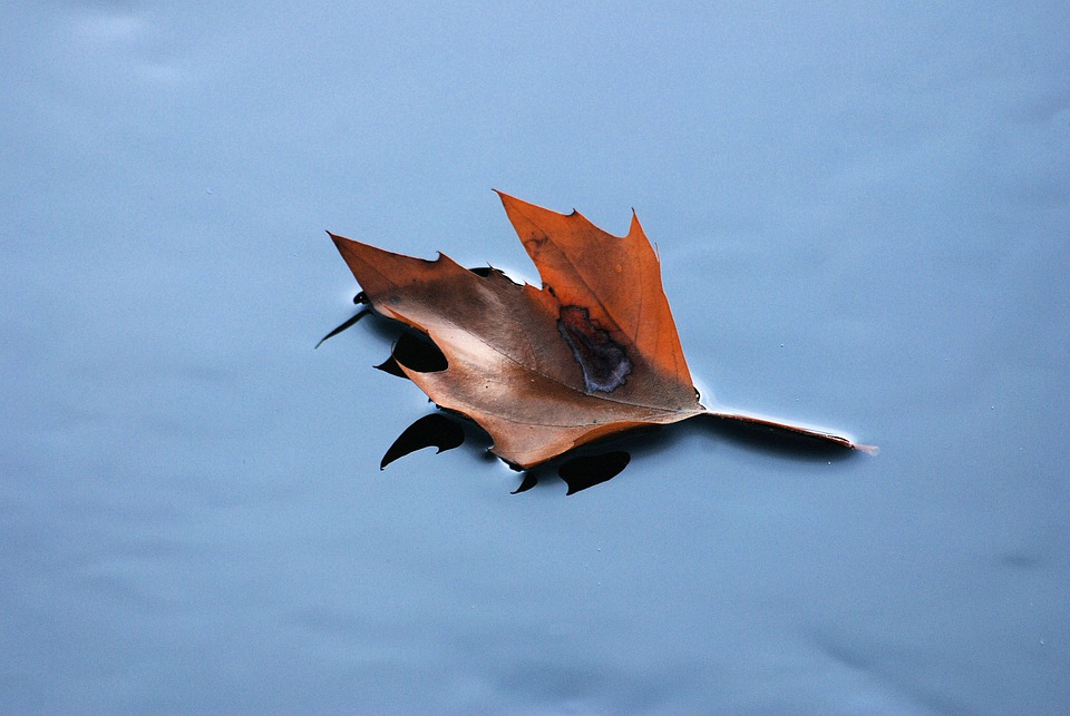Floating Leaf, Autumn, Dried Leaf, Fall, Plant, Natural