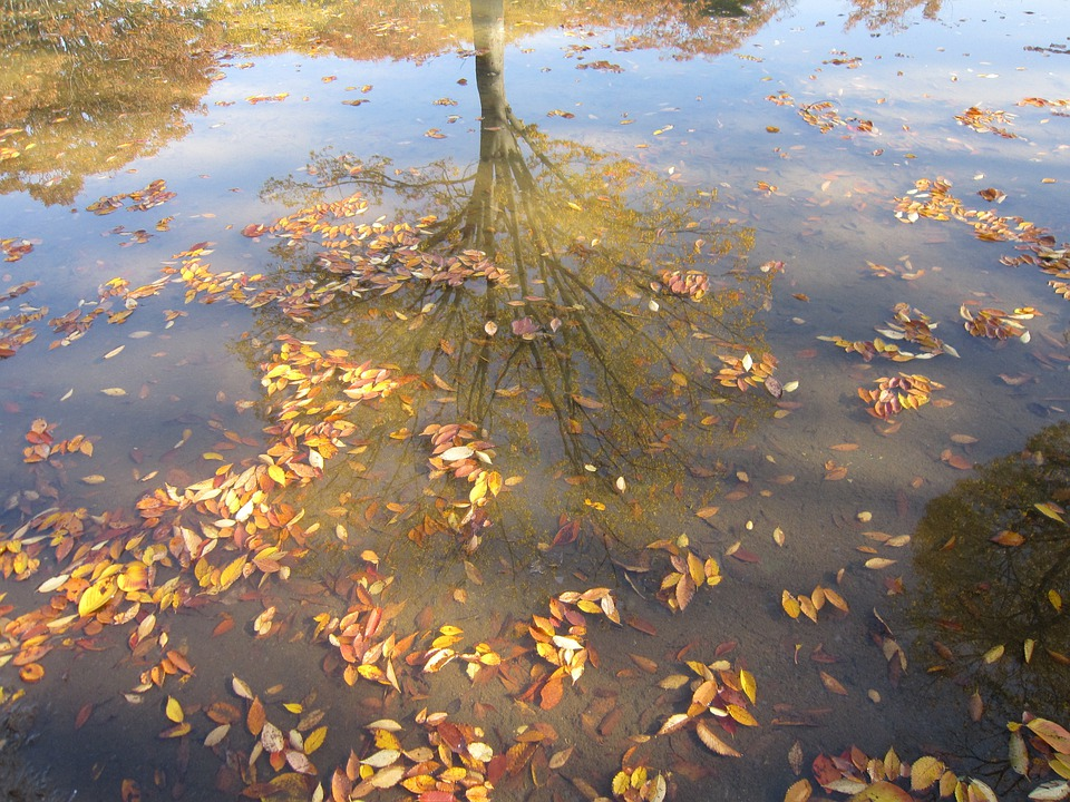Autumn, Leaves, Floating, Fall Leaves, Reflection