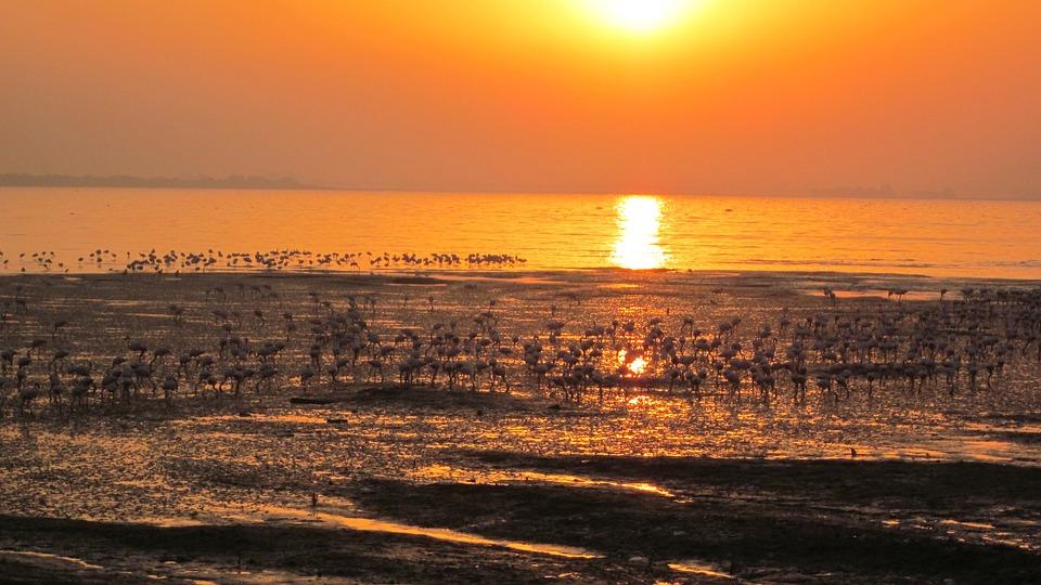 Flamingos, Beach, Sunrise, Landscape, Bird, Flock