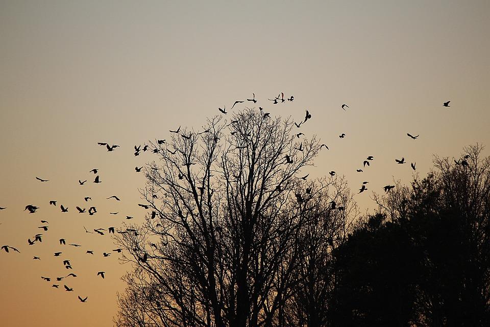 Birds, Swarm, Flock Of Birds, Dig, Departure