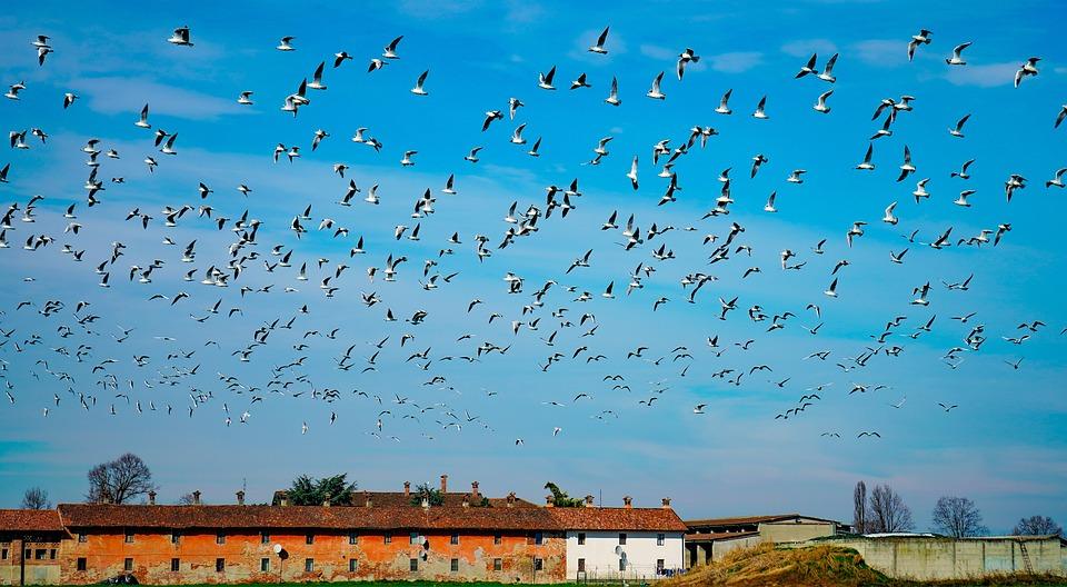Seagulls, In Flight, Flight, Flock, Sky, Birds, Freedom