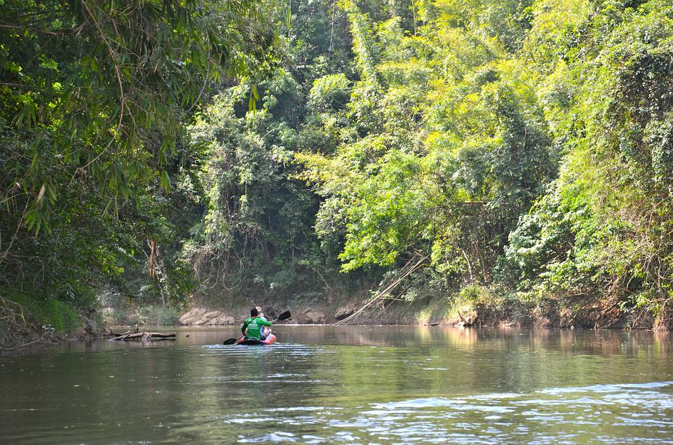 Thailand, Flodfärd, River, Canoe, Water, Jungle