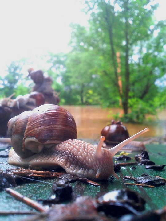 Worm, Snail, Animal, Flood, Conch, Mollusk, Mess, Group