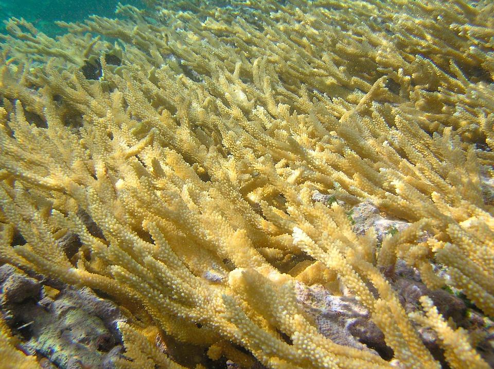 Sea, Ocean, Water, Underwater, Floor, Bottom, Coral