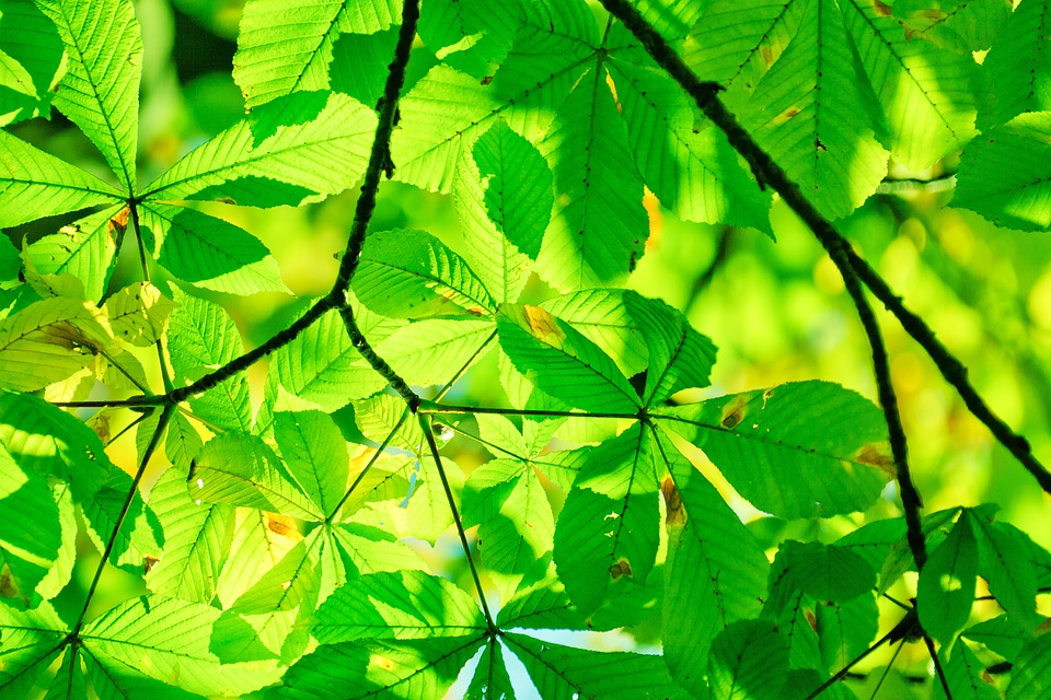 Abstract, Background, Detail, Ecology, Flora, Foliage