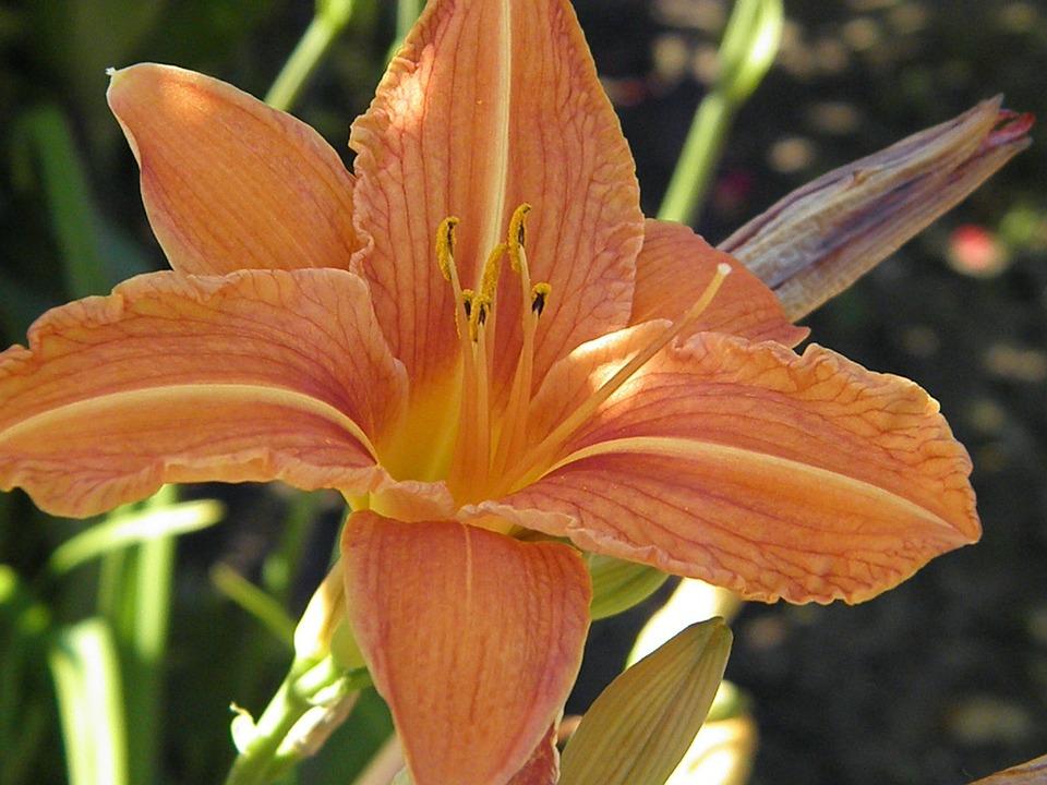 Flower, Plant, Garden, Flora Beauty, Spring, Bees
