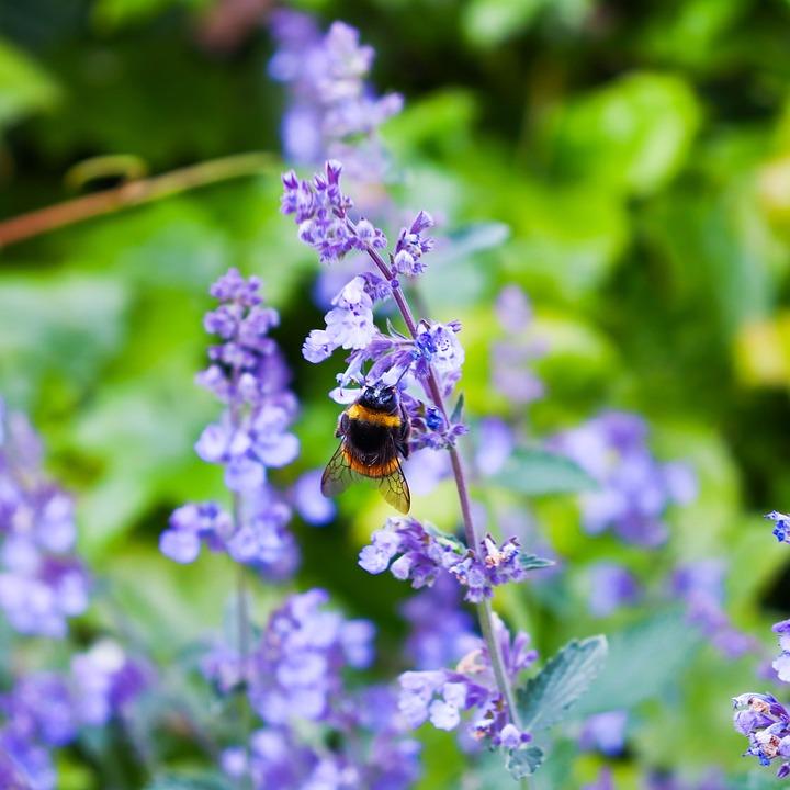 Flower, Plant, Flora, Nature, Bee, Bumblebee, Purple