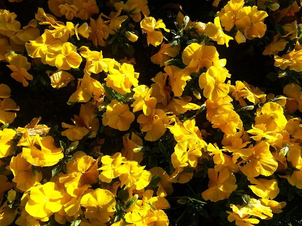 Bloom, Yellow, Spring, Flower, Flora, Close, Blossom