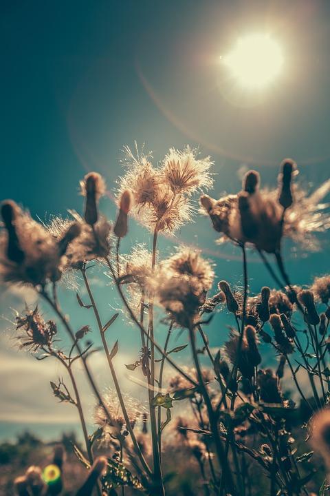Bloom, Blossom, Field, Flora, Flowers, Grass, Outdoors