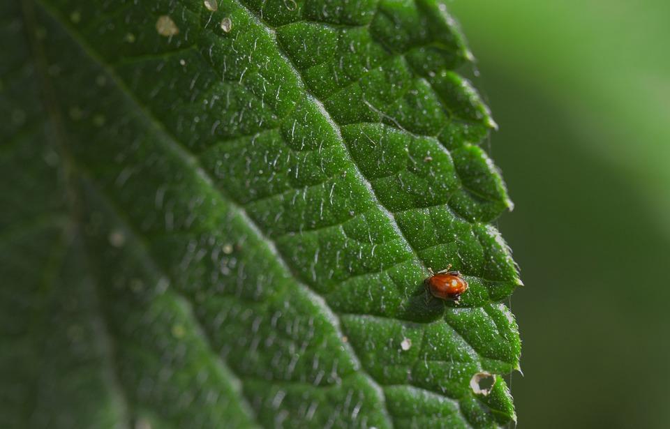 Costa Rica, Plant, Leaf, Flora, Nature, Botany