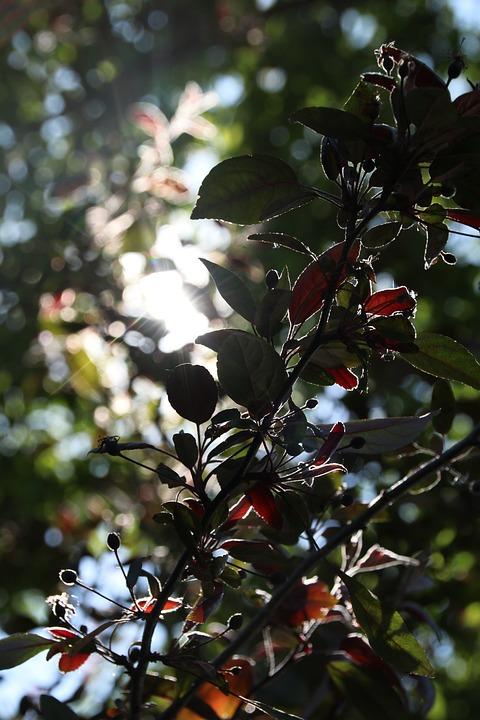 Leaves, Foliage, Branch, Bush, Flora, Botany, Nature
