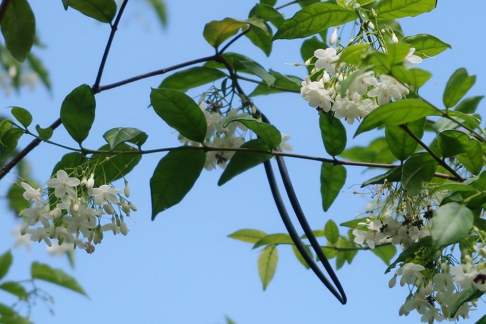 Leaf, Flora, Tree, Branch, Nature, Freshness, Flower